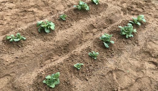 【家庭菜園】初心者にオススメの野菜5選!失敗しやすい野菜も紹介
