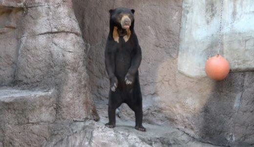 日清紡のクマは本物?ぬいぐるみ?CMに出演する熊がいる動物園はどこか調査